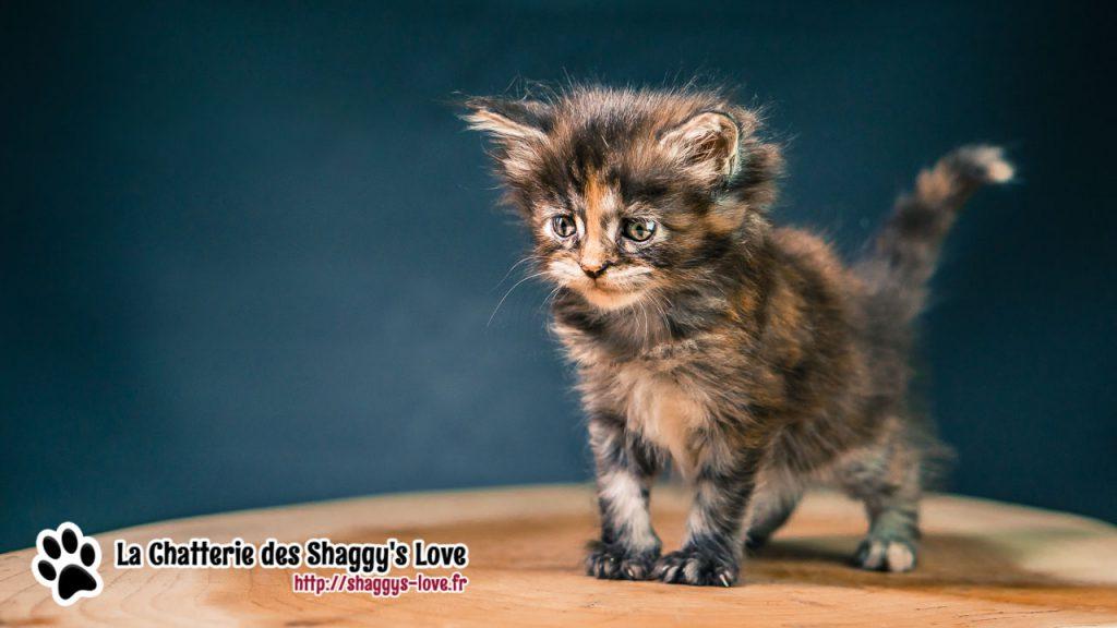 DSC03071-shaggys-love